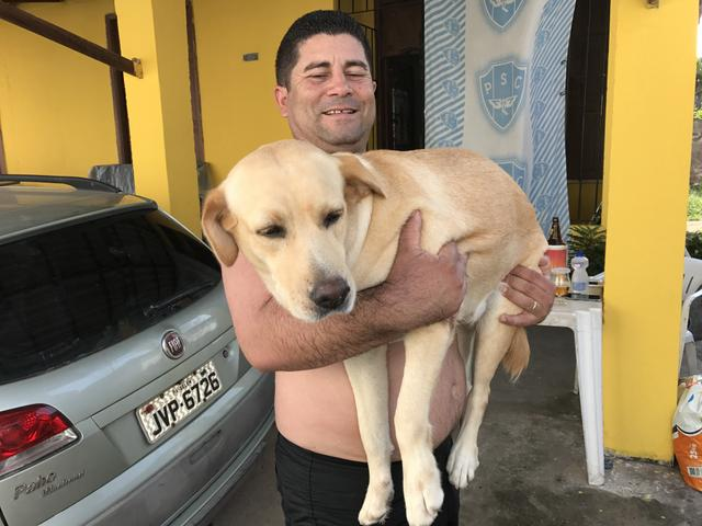 Cachorro Benavente Procurando Para Meu O Labrador