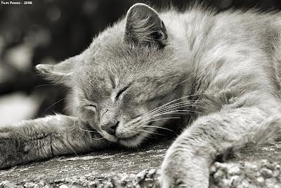 De Prazer Relaxamento Garanta Seu E Já Momento